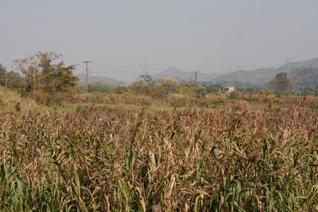 wetland conservation: Nam Sang Wai Stock Photo