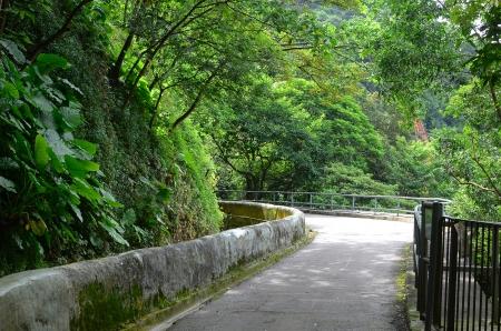 路在大自然的路徑 版權商用圖片