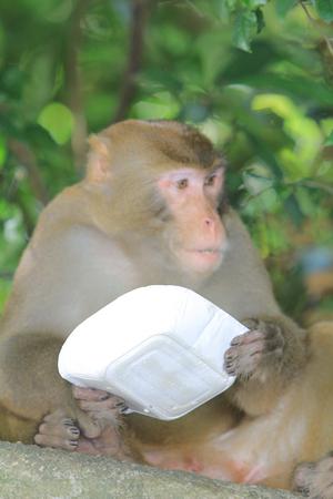 dishy: macaque eats