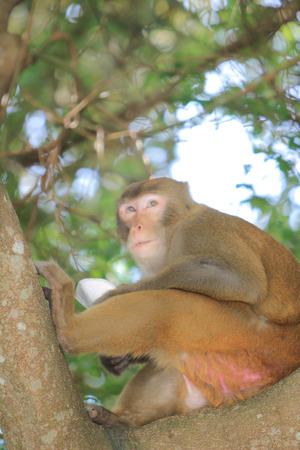 dishy: macaque Stock Photo