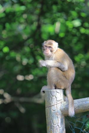 dishy: Monkey at golden hill, hong kong
