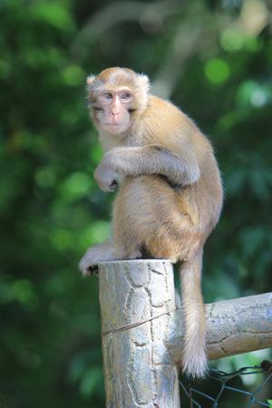Monkey at golden hill, hong kong