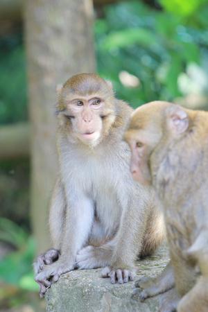 dishy: Monkey macaque