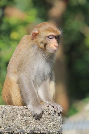 A silly albino macaque in Hong Kong