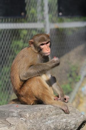 dishy: Monkey at golden hill, hong kong Stock Photo