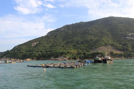lake dweller: lamma island