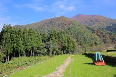 sencha tea: farm fields Stock Photo