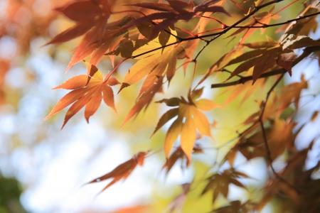特寫鏡頭五顏六色的樹葉在autum