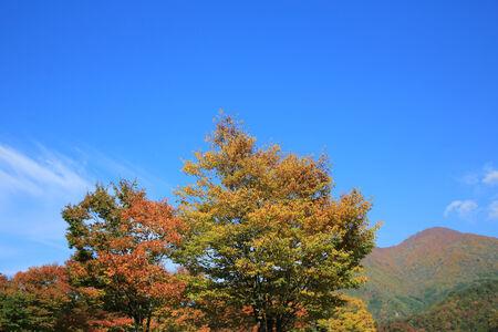 fall in Center of japan Imagens