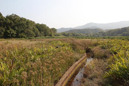 Sam A wan wetland , hong kong photo
