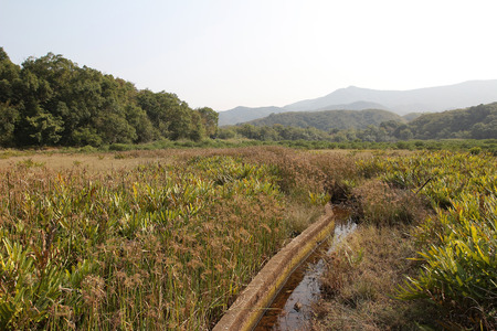 riverside landscaping: Sam A wan wetland , hong kong Stock Photo