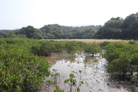 landscaping riverside: Sam A wan, hong kong
