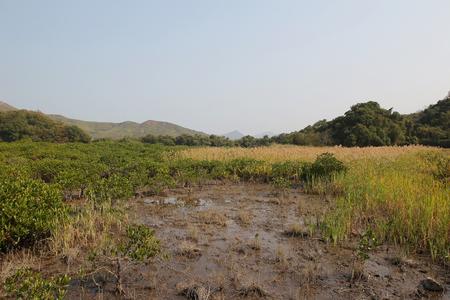 riverside landscaping: Landscape view in Sam A wan, hong kong
