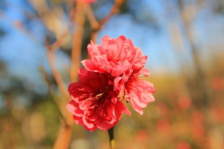 romcaper: blossom