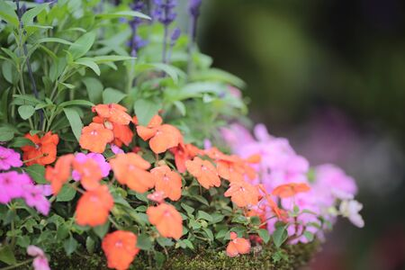 flower bed: flower bed
