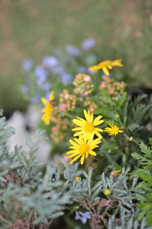 graden: graden of flower Stock Photo
