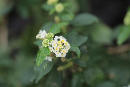 flora: flora
