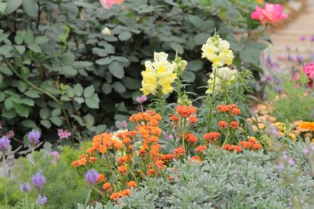 Landscaped flower garden photo