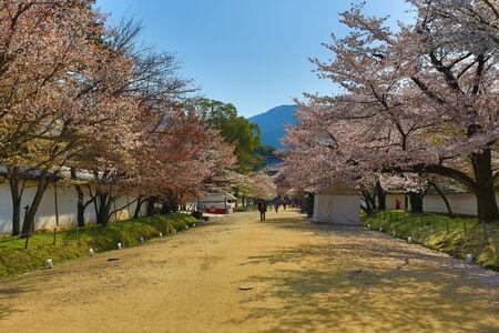 Daigoji Temple Japanese blooming cherry photo