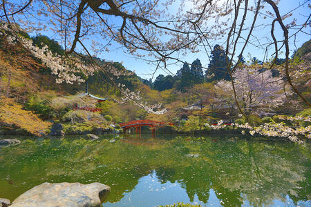 Daigoji Temple Japanese blooming cherry