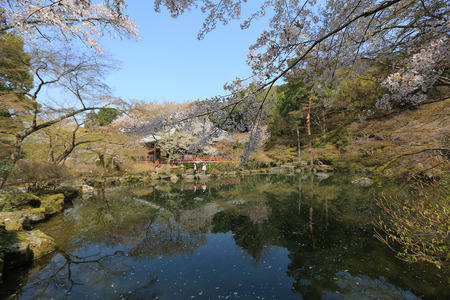 Daigoji Temple Japanese blooming cherry