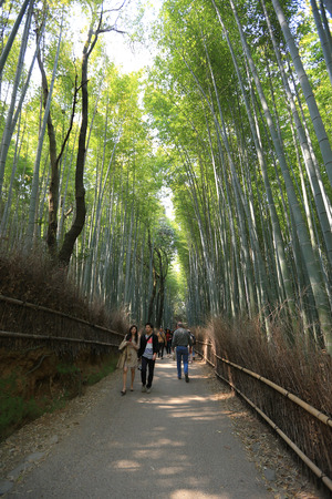 The bamboo forest of Kyoto, Japan