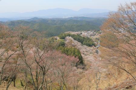 seaonal: Cherry Blossom at Yoshinoyama