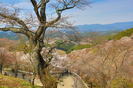 Yoshinoyama, Nara, Japan at the spring  photo