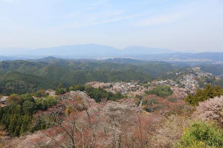 Yoshinoyama, Naka senbon ,Shimo senbon photo