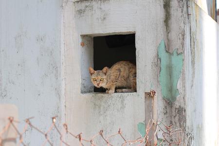 grievous: cat