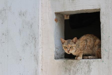 distressful: cat