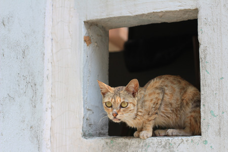 plainness: cat