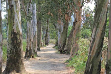 nam: Nam Sang Wai Wetland