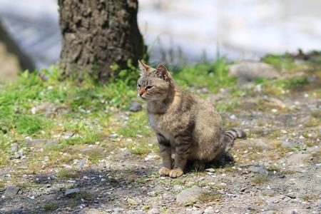 piteous: cat