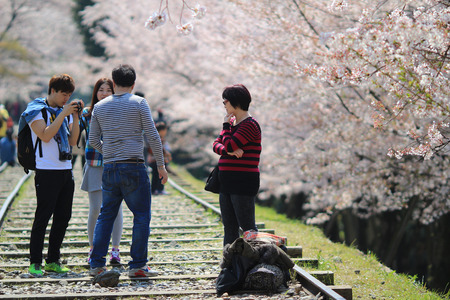 incline: Cherry Blossom at Keage incline, Kyoto in Japan