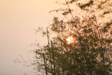 Bamboo  leading to the sun photo
