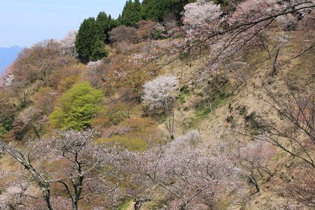 seaonal: Yoshinoyama, Naka senbon ,Shimo senbon
