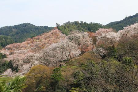 kink:  Yoshinoyama, Nara, Japan