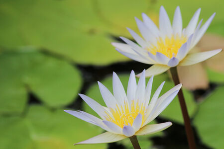 water lily pool photo