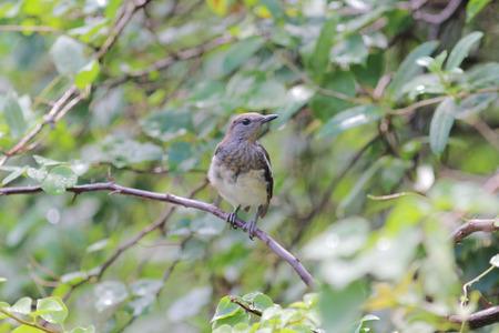 songbird: songbird Stock Photo