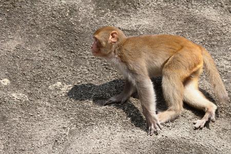 dishy: A silly albino macaque in Hong Kong