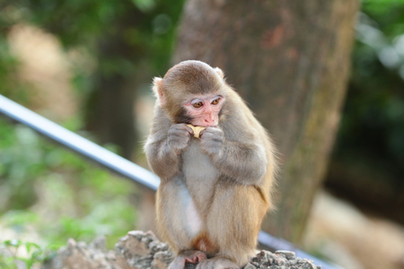 A silly albino macaque in Hong Kong