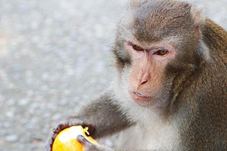 A monkey in Kam Shan Country Park, hong kong photo