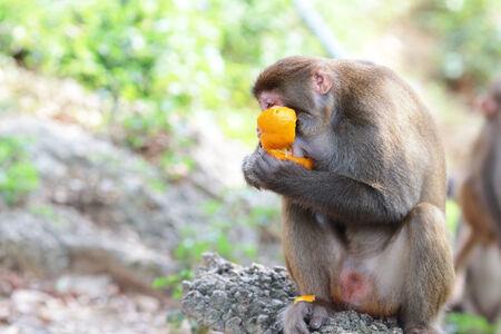 dishy: A monkey in Kam Shan Country Park, hong kong