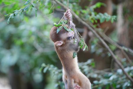 A silly albino macaque