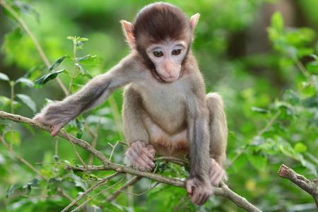 b�b� singe: monkey Baby Banque d'images