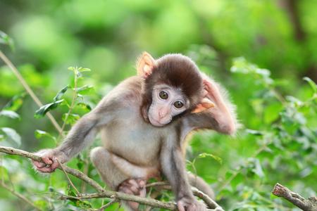 albino macaque in Hong Kong