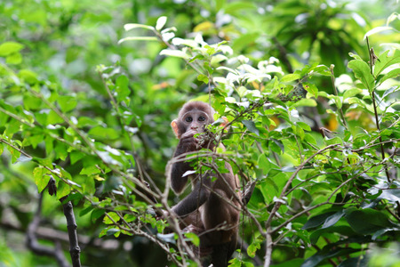 country park: monkey  in Kam Shan Country Park, Kowloon, Hong Kong Stock Photo