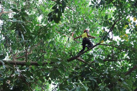 heights job: tree climber hanging