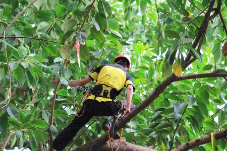 tree climber hanging